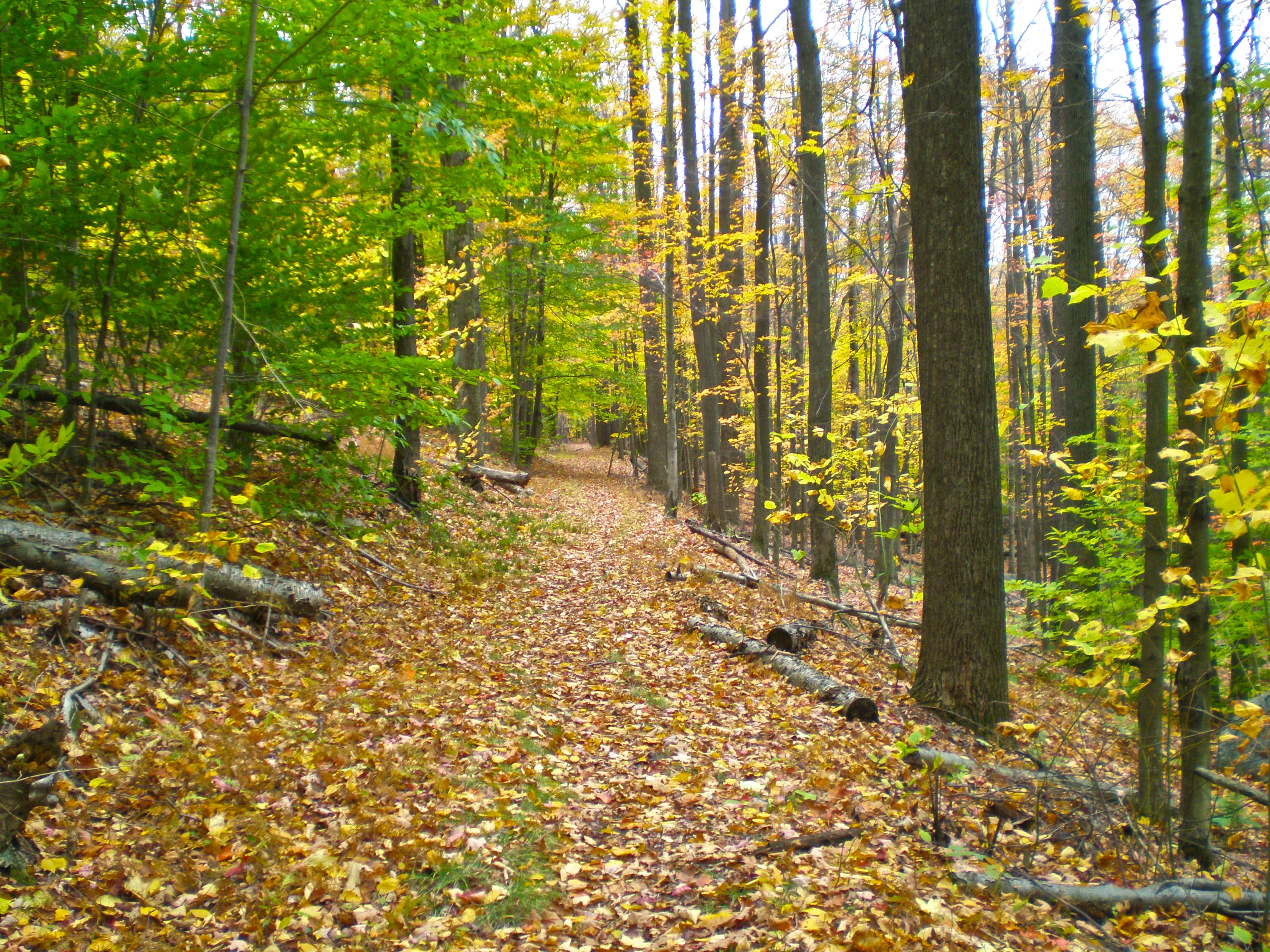 Six Hikes To Do In Eastern Pennsylvania This Autumn