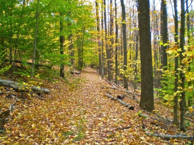 Old Logger's Path