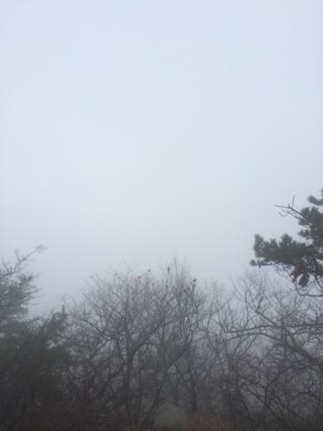 Foggy Mt Tammany