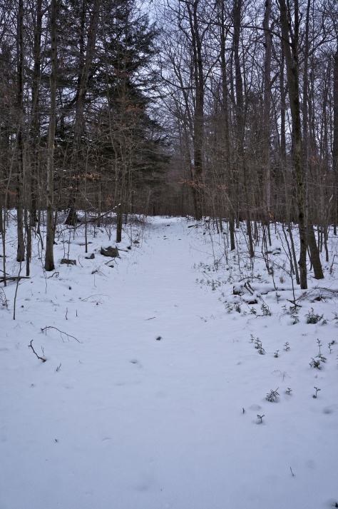 Untouched cross country ski trail