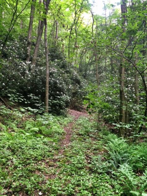 Round Island Trail