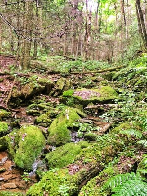 Mossy rocks of Jacob's Hollow
