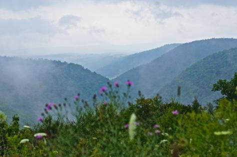 Hoagland Vista