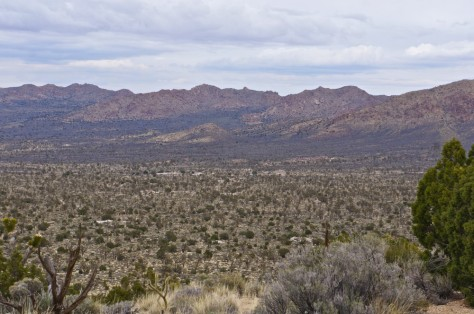 Ivanpah Mountains and the joshua tree forest