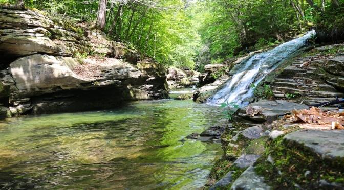 Loyalsock State Forest: Rock Run, Sharp Top, Hoagland Branch