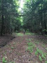 Yellow Dog Trail