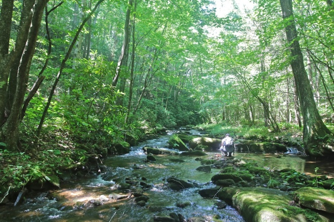 Clendenin Branch, Sproul State Forest