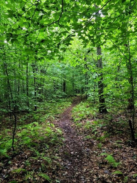 Pinchot Trail